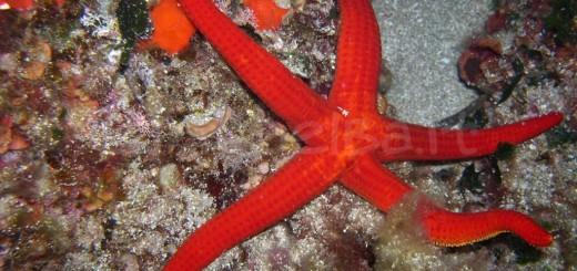 diving-dscn4457