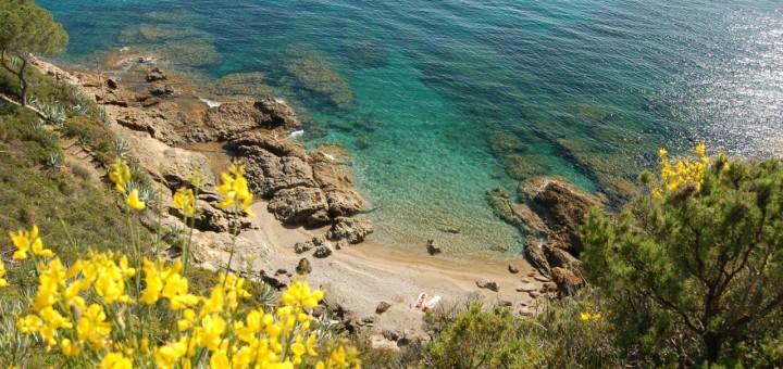 Fiori Gialli Isola Delba.Com E Il Maggio All Elba I Love Elba