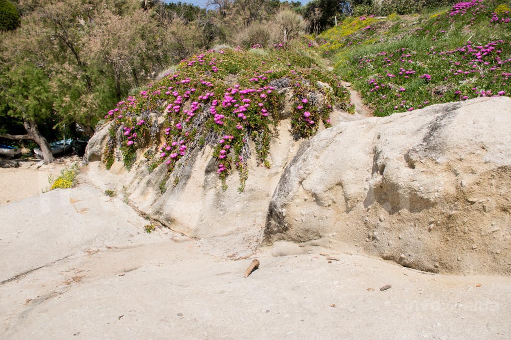Spiaggia-Cotoncello-Marciana-8548